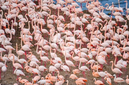 Flamants Roses à Sigean